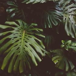 Orman Kanunları